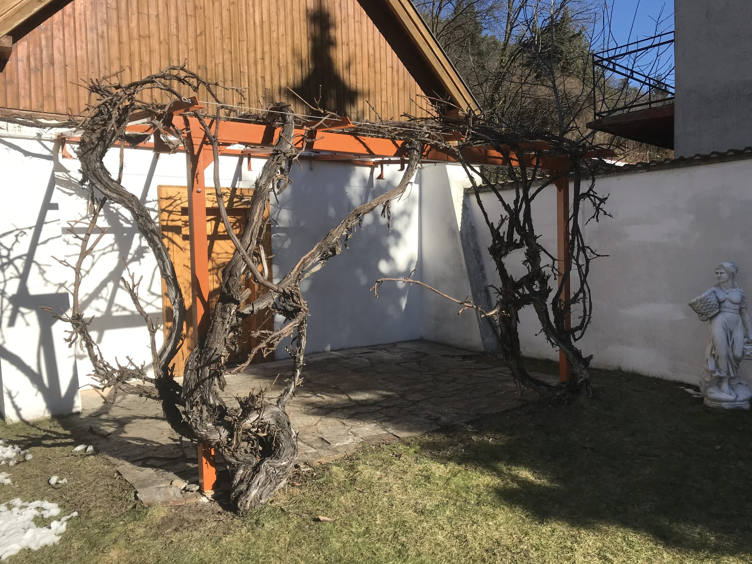Schlosserei Strodl Weinlaube Stahl pulverbeschichtet